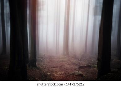 Mystical surreal forest Impression with fog