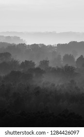Mystical view on forest under haze at early morning. Eerie mist among layers from trees silhouettes in taiga in monochrome. Calm atmospheric minimalistic monochrome landscape of majestic nature.