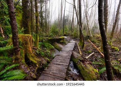 Mystical View of the Trail in Rain Forest during a foggy and rainy Winter Season. Woods in Squamish, North of Vancouver, British Columbia, Canada.