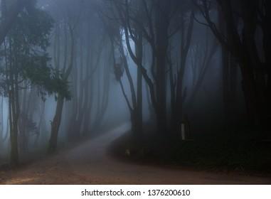 Mystical woodland Sintra, Portugal