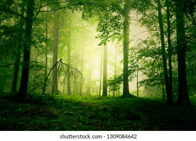 Mystical yellow green foggy light in fairytale forest landscape.