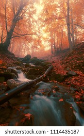 mysty scenic dawn landscape, river in gold sunlight autumn forest, amazing colorful scenery ,red falled leaves near fast stream, Carpathians autumn landscape,  Europe, nature vertical background image