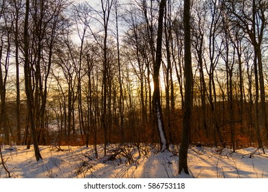 Mythically beautiful sunrise in a snow covered winter forest.
