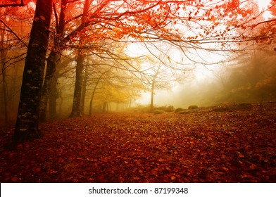 Gerês N. P. Portugal in beautiful Autumn colors