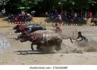 Na Pa Subdistrict, Ban Bueng District, Chon Buri, Thailand 31 July 2016 Water buffalo racing tradition is a folk sport of Chon Buri people during the rice farming season