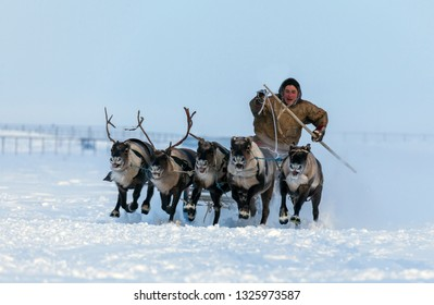 Nadym, Russia - February 23, 2019: Yamal, open area, tundra,The extreme north,  Races on reindeer sled in the Reindeer Herder's Day on Yamal, Sporting activity.editorial