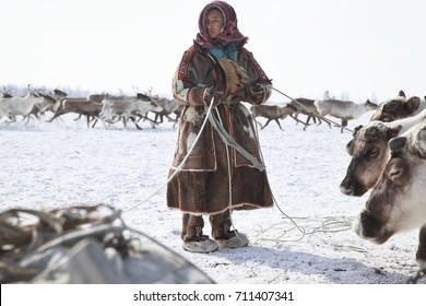 Nadym, Russia - March 18, 2017:assistant reindeer breeder.