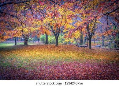 naejangsan mountain in autumn at jeongeub city south Korea
