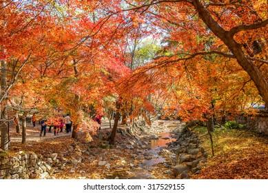 NAEJANGSAN,KOREA - NOVEMBER 30: Tourists taking photos of the beautiful scenery around Naejangsan,South Korea during autumn season on November 30, 2014.
