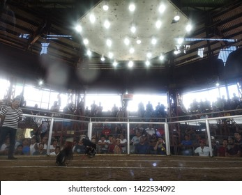 Nagacity philipine 31 5 2019 . Cock fight inside professional chicken fight ring .