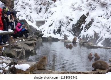 Nagano Japan-Dec 2017: Tourist  gathering at Jigokudani Snow Monkey Park to see snow monkeys in hot spring.