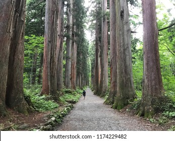 Nagano, Nagano Prefecture/Japan - July 8, 2018: A solitary person walks through the Tokugushi cedar forest on the way to the upper shrine.