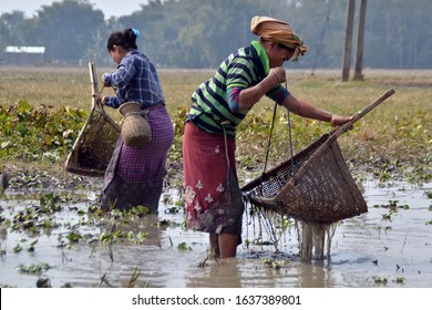 Nagaon, Assam / India- Feb 06 2020 : A tribal woman busy in fishing with traditional fishing tool near Raha in Nagaon district of Assam,India .