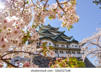 """""""Nagoya, Aichi / Japan - 01April2018: With beautiful cherry blossom trees Nagoya castle was the most important attraction point for locals and tourist during this early spring."""""""