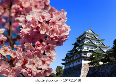 Nagoya castle in Nagoya city.,Japan.