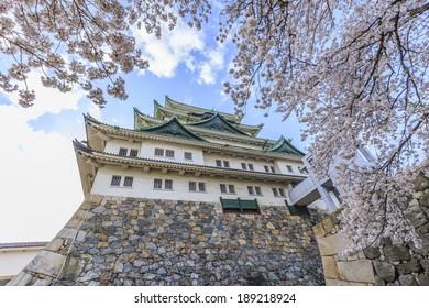 Nagoya Castle with Sakura view 3
