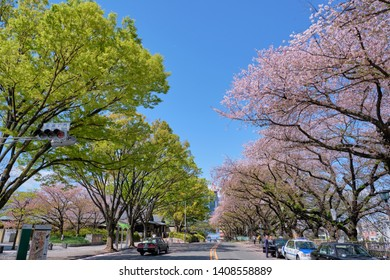 NAGOYA, JAPAN - APRIL 15, 2019: The road in front of nagoya castle japan with beautiful green and pink color of maple and cherry blossom trees, Nagoya, Japan