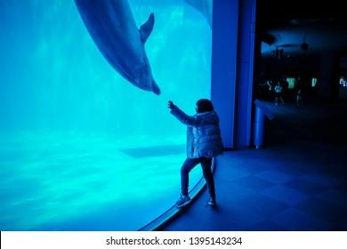 Nagoya, Japan - April 16, 2019 : girl reach out hand to dolphin in Nagoya aquarium.