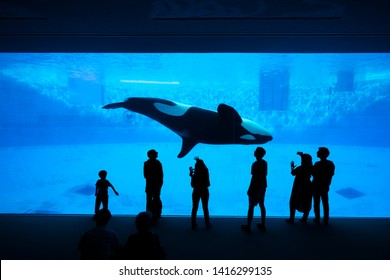 Nagoya, Japan – May 12, 2019: The silhouette of tourists watching an orca or killer whale whale at the aquarium.