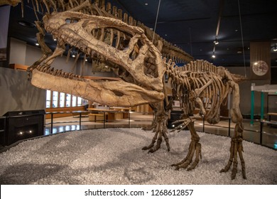 Nagoya Museum, Japan - December 2018 : Inside Nagoya city science museum on discovering the earth room with fossil dinosaur.