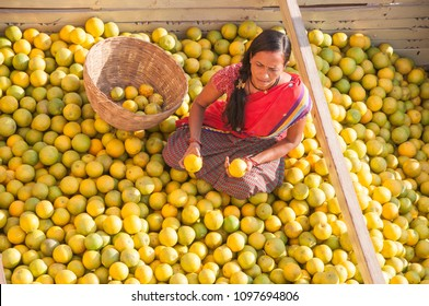 NAGPUR, MAHARASHTRA, INDIA 3 DECEMBER 2014 : An unidentified women worker sort oranges for packaging at a wholesale vegetable market in Nagpur, Maharashtra, Nagpur is known as Orange City.