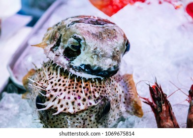 Naha, Okinawa, JAPAN : Local Fugu or pufferfish in First Makishi Public fish and seafood Market