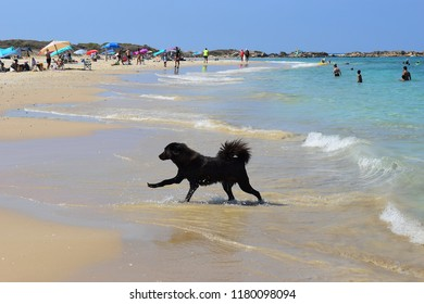 Nahsholim beach, Haifa area, Israel - 11 September 2018 : people rest on the beach Nahsholim (north of Israel), in the foreground runs a dog of black color