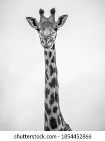 Nairobi National Park Kenya wildlife animals