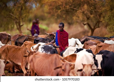Nairobi/Kenya-March 13.2018 Year: Masai shepherds with herd of cows in Amboseli National Park Kenya