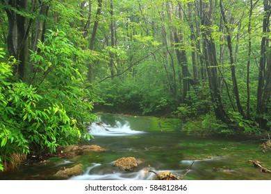 Nakajima-recreational forest toriumi marimo