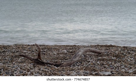 naked branch of the tree laying in the pebble beach