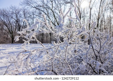 Naked branches of bushes and trees in winter, note shallow depth of field