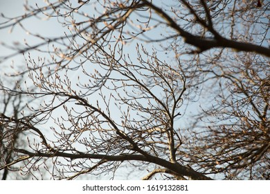 Naked Tree Branches in Winter