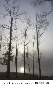 naked trees by a lake in foggy sunrise