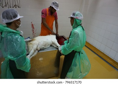 Nakhon Pathom,Thailand,January 18,2018.Sheep and goats who kill must be a Muslim in abattoir or slaughterhouse