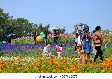 NAKHON RATCHASIMA - DECEMBER 30 : People travel and walking in Cosmos Flowers Field of Jim Thompson Farm at Countryside on December 30, 2013 in Nakhon Ratchasima, Thailand
