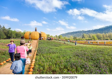 Nakhon Ratchasima, Thailand - December 28,2015: Cosmos flowers garden festival and architecture local most popular in Thailand at jim thomson farm in Nakhon Ratchasima Thailand