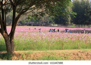 Nakhonratchasima , Thailand, DEC 25,2016 : At the Jim Thompson farm.Many people travel in beautiful many flowers field.