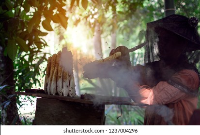Nakornsrithammarat, Thailand -April 9, 2018: Asian beekeeper brushing the bee in honeycomb for collecting honey with protective workwear and calming bees by smoke before removal, Thailand