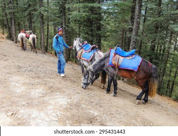 Naldehra, Shimla / India - December 7, 2011: man waiting with the horses on the hills of Shimla