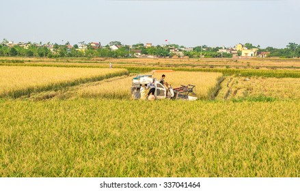 NAMDINH VIETNAM - October 27, 2015: Farmers harvesting rice in their fields