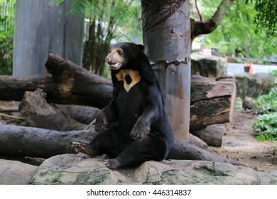 It's name Malayan sun bear