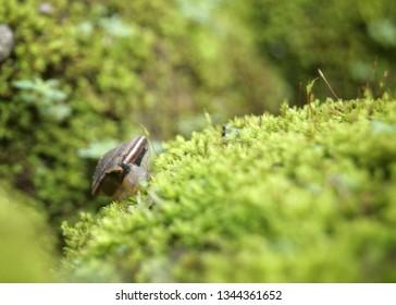 The name is most often applied toland snails,terrestrialpulmonategastropodmolluscs.