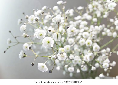 The name of these flowers is Annual Baby's-breath,Showy Baby's-breath. Scientific name is Gypsophila elegans.