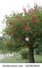 The name of these flowers is  Erythrina crista-galli. Scientific name is Erythrina crista-galli.