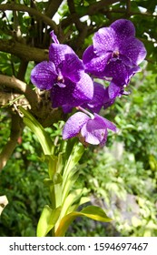 The name of these flowers is Hong Kong orchid tree. Scientific name is Bauhinia blakeana.