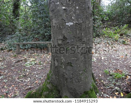 Names Carved On Tree Trunk Stock Photo Edit Now 1184915293
