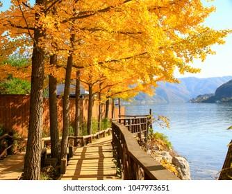 Nami Autumn Korea
