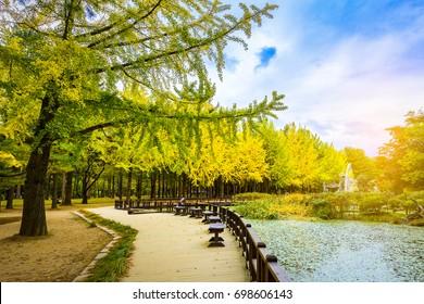 Nami island in autumn of Korea.