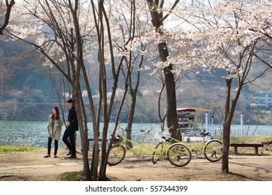Nami island, Korea-April 2014: In spring time, love couple always spend time for ride bicycle in a romantic scene with mountain, flowers blossom, trees and river in a sunshine day.